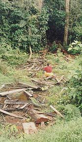 Damage from log  poachers